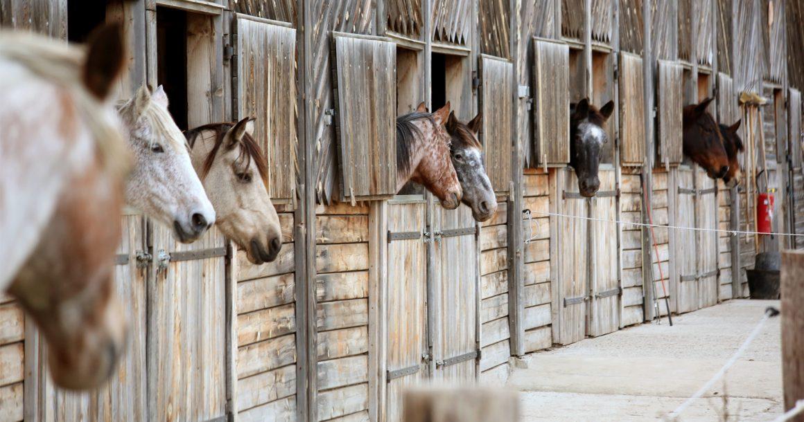 paarden-03